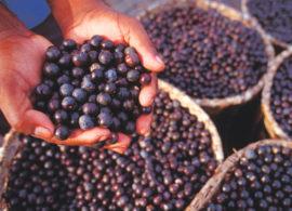 ブラジル原産<br>奇跡のフルーツ